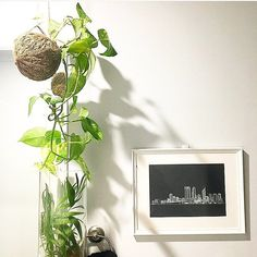 Unique local and handmade  . Perth sure has some pretty rad creatives! Love this snap by @leafandmoss_perth featuring my Perth Cityscape print. If you're a plant lover (especially indoor plants that are hard to kill!) make sure you check out @leafandmoss_perth for the perfect gift or addition to your shelf  . . . . . . . . . . . #perth #perthgirlboss #perthcreatives #perthartist #perthart #perthhandmade #perthsmallbusiness #indoorplants #kokedama #terrarium #localbusiness #whiteink…