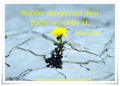 Wunder dringen aus dem Boden wo Liebe ist. - Monika Minder - ~ Quelle: GedankenGut https://www.facebook.com/Gaby.GedankenGut/ http://www.dreamies.de/mygalerie.php?g=jtdysguz