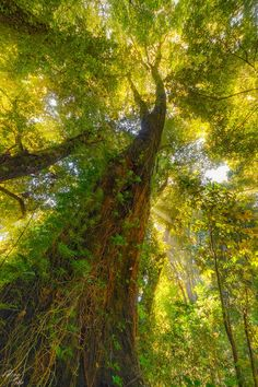 Bosque Valdiviano by Luis Felipe Peña Sandoval on 500px. wow would love to be under this tree