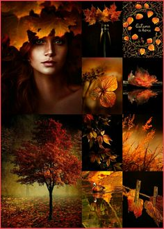 Collage by Renée