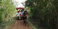 "Be sure to visit the neighboring town of Cuzamá. There you can get on a vintage wagon ""pulled by mules"" which will take you to three spectacular cenotes."