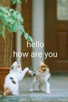 Morning Qoutes, Morning Greetings Quotes, Morning Prayers, Morning Messages, Good Morning Sister, Good Morning Friends, Good Morning Good Night, Good Morning Images, Good Morning Gif Animation