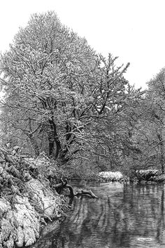 Slightly Foxed Cover artist no. 48 - Sarah Woolfenden - River in Winter. Sarah Woolfenden trained at The Slade and taught art for many years. Based in North Devon and a member of the South West Academy she draws large pictures of trees and woods in fine pen. To see more of Sarah's work which is available as prints and cards go to www.sarahwoolfenden.co.uk