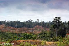 Will merging competing ministries help save Indonesia's forests?
