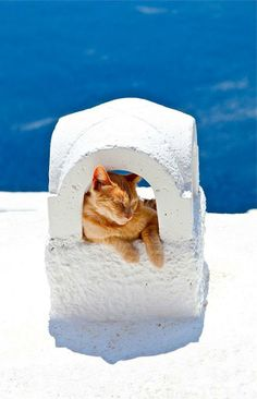 Greek Kitteh enjoying a little siesta in Santorini island