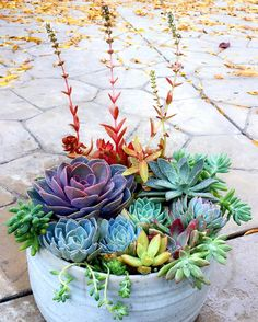 Container Gardening Ideas 100 Succulent Garden Ideas for Uniqueness and Intrigue in Your Garden - To bring some magic into your garden, try one of these succulent garden ideas. Succulents are beautiful for displays and require little attention. Succulent Gardening, Planting Succulents, Container Gardening, Planting Flowers, Succulent Planters, Succulents Diy, Cactus Planta, Cactus Y Suculentas, Colorful Succulents