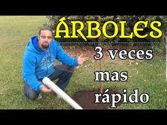 31 Ideas De Riego A La Raiz Riego La Raiz Raiz De Arbol