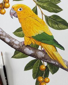 Green Glass Bottles, Bird Art, Parrot, Watercolor, Instagram, Artist, Animals, Painting, You Are Special