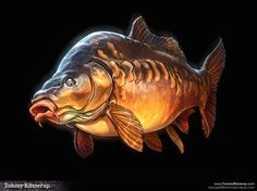 Mirror carp illustration