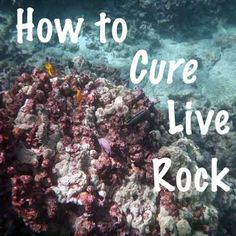 Looking for information about how to cure live rock? Live rock is one of the most important things you will add to your saltwater aquarium. It serves as both the structural and filtration-al… (I never miss an opportunity to make up a new word) foundation of most saltwater aquarium systems. Live rock also provides an important source of biological interest ...
