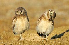 Google Image Result for http://occupyfun.com/media/photos/1/funny-animals.jpg