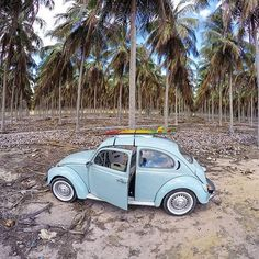 Decreto liberado! MIM ACHER ' 'Fusca azul ' ' 'featured tag #fuscaazul ' ' #fusca #beetle #bluebeetle #vosvos #boble #kafer #instafusca #euviumfuscaazul #kever #escarabajo #euviumfusca #aircooled #oldvwclub #vw #volkswagem #vwbeetle #maggiolone #punchbuggy #soloparking #vwporn 'foto: @benjaminsegundo