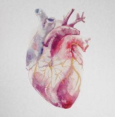 Heart - anatomic watercolor