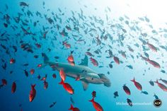 The International League of Conservation Photographers (ILCP) � an organization that aims to raise awareness of critical environmental issues through the means of photography � has drawn attention to sharks' plight in the stunning picture.
