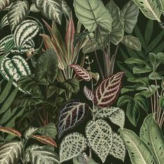 Mischievous Monkeys Mural Wallpaper is a leaf wall mural featuring dense luscious green foliage in lifelike scale, enabling you to create your own jungle retreat within your home. Lush Green, Monkeys, Wall Murals, Plant Leaves, Wallpaper, Image, Jumpsuits, Wallpapers, Monkey
