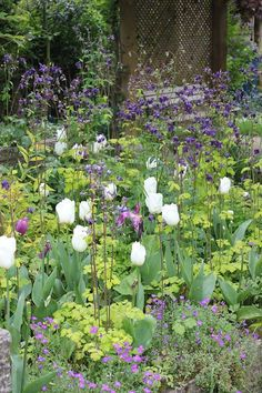 Plants to attract hedgehogs. My guide to what to grow in your garden to attract insects and wildlife. Creating a hedgehog friendly wildlife garden.