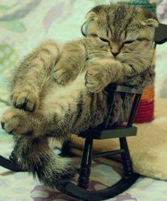 Não me olhe assim só por eu ter nascido privilegiado em ser um gato #gato #sono #preguiça