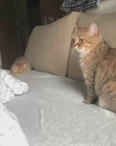 Play with me mom - your daily dose of funny cats - cute kittens - pet memes - pets in clothes - kitty breeds - sweet animal pictures - perfect photos for cat moms Cute Baby Cats, Cute Little Animals, Cute Cats And Kittens, Cute Funny Animals, Kittens Cutest, Funny Cats, Baby Kitty, Funny Cat Faces, Cats Humor