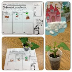 Little Bird Kindergarten: Fee Fi Fo Fum! Non Standard Measurement with Jack and the Beanstalk! Kindergarten Science, Science Activities, Preschool, Kindergarten Projects, Fairy Tales Unit, Fairy Tale Theme, Traditional Tales, Plant Science, Project Based Learning