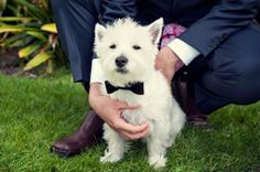 Animali davvero eleganti, da assumere! - http://www.ahboh.it/animali-eleganti-e-socievoli/