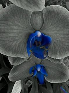 Wow!!!☝ Amazing Orchids nature bw blue orchid from my garden love (from @DMBaez14 on Streamzoo)