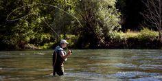 Le réchauffement climatique rapetisse les poissons de rivière.