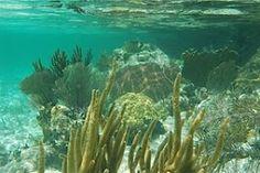 Coral Reef, Cuba