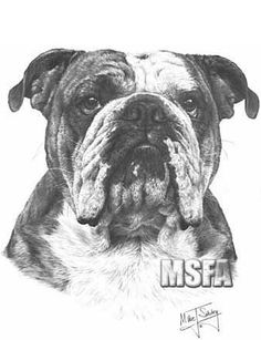 print a picture of a bulldog | English Bulldog print from a graphite pencil drawing by Mike Sibley.
