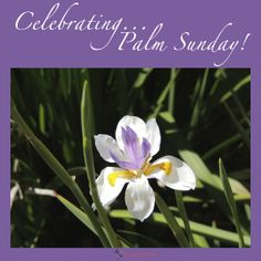 Celebrating... Palm Sunday!