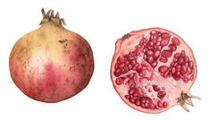 Pomegranates Painting by Botanical Artist Fiona wheeler - member of The Society of Floral Painters and Guildford Art Society - Private commi...