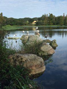 Birds relaxing on the rocks