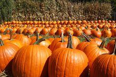 Kroll's Fall Harvest Farm - Waukegan, IL