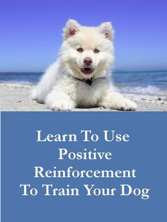 Learn To Use Positive Reinforcement to Train Your Dog  // KaufmannsPuppyTraining.com // Kaufmann's Puppy Training // dog training // dog love // puppy love