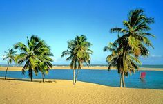 Penedo - AL. Dunas douradas e coqueirais emolduram o encontro do rio com o mar