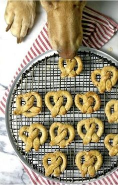 Oat and Apple Dog Treats. Oat and Apple Pretzel Dog Treats! Spoil your pup with these healthy dog treats made with Gluten free oats and oat flour! They deserve it! Puppy Treats, Diy Dog Treats, Homemade Dog Treats, Soft Dog Treats, Dog Biscuit Recipes, Dog Treat Recipes, Dog Food Recipes, Organic Dog Treats, Natural Dog Treats