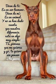 Citas sobre Perros - Página 6 - Mi Perro Es Único
