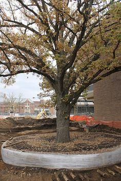 Ross Bur Oak Move Prep At University Of Michigan (Ann Arbor), October 20
