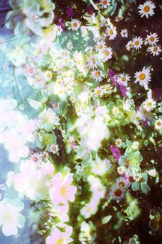 #colors #beautyofnature #flowers