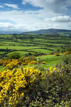 Leinster, County Wicklow, Republic Of Ireland Love Ireland, Ireland Travel, Irish Landscape, Irish Cottage, Irish Eyes, Republic Of Ireland, Emerald Isle, Vacation Places, Countryside