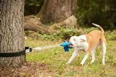 The Bow-Wow Super Tug Dog Toy - Pit Bull Tough - Spring Pole ...Great idea will make one my self