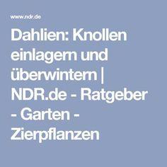 Dahlien: Knollen einlagern und überwintern   NDR.de - Ratgeber - Garten - Zierpflanzen