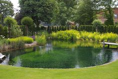 Natural Swimming Ponds, Natural Pond, Water Garden, Lawn And Garden, Water Plants, Lake Landscaping, Swimming Pool Lights, Cottage Garden Design, Ponds Backyard