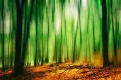 "Slovakia, Zobor, Nitra: Spirit Of Trees #PHOTOFRANO  Photography & FineArt by photofrano  ""Exposure📸 is just the beginning""  #HDR #BW   #fb : fb.com/PHOTOFRANO  #blog : photofrano.wordpress.com  #portfolio : 500px.com/PHOTOFRANO Hdr, Northern Lights, Fine Art, Landscape, Nature, Wordpress, Trees, Photography, Spirit"