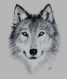 Zobacz zdjęcie wilk rysunek w pełnej rozdzielczości