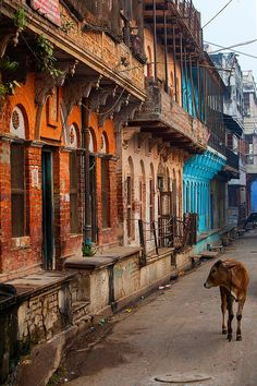Cow in the City - Varanasi, India *** See more beautiful places at… Varanasi, Goa India, India Map, Taj Mahal, India Street, Amazing India, India Culture, Indian Architecture, India Colors