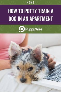 Potty training a dog is hard enough, let alone doing it while living in an apartment? Here are 9 easy tips to teach you how to potty train your dog in an apartment. Dog Training Classes, Potty Training, Training Your Dog, Training Pads, Training Collar, Petsmart Dog Training, Kinds Of Cats, Purebred Dogs, Dog Runs