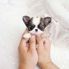 #Repost @natureandsweetness  Follow @babyanimalshq for more amazing cute baby animals photos and videos @babyanimalshq  Tag your friends below  #natureandsweetness Tag #natureandsweetness and follow us to be featured!  No Copyright Intended - Footage belongs to their respected owners. Please email Natureandsweetness@gmail.com for crediting issues