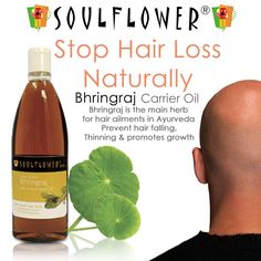 Bhringraj Oil stops hair from falling, graying, thinning and promotes growth