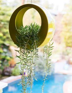 Senecio in a hanging pot = an outdoor chandelier!