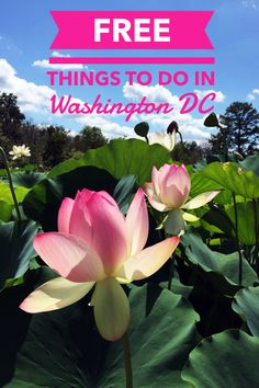 There are so many FREE things to do in Washington, DC that you could easily plan your itinerary around only free attractions and still not get to everything! Map included! /////////////////////////////////////////////////////////////////////// Washington, DC   Washington, DC Travel   Washington, DC Free   Washington, DC Things to Do   Washington, DC Attractions   Washington, DC Monuments   Washington, DC Museums   Washington, DC Parks   thosewhowandr.com
